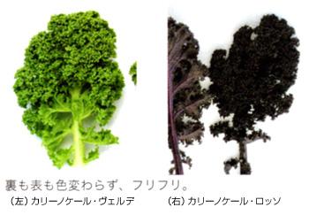 しゃぶしゃぶ温野菜で絶対に食べたい ...