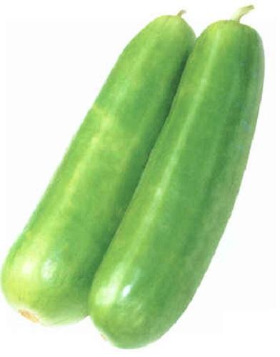 e-種やは国内最大級の野菜種・花種・苗・農業資材の販売サイトです 白はぐら瓜[ウリ]