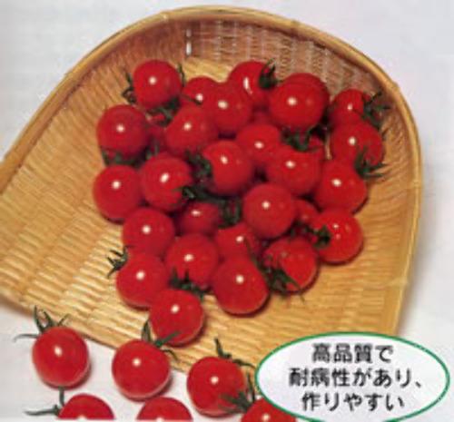 00000947_photo1.jpg