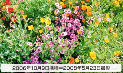 00014781_photo1.jpg