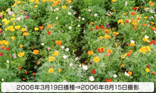 00014783_photo1.jpg