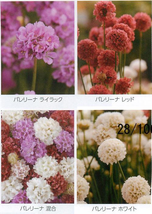 00015098_photo1.jpg