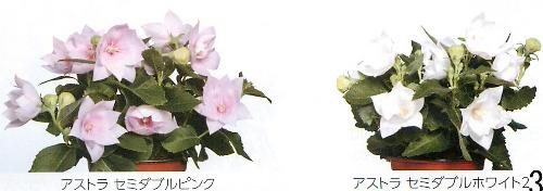 00015129_photo1.jpg