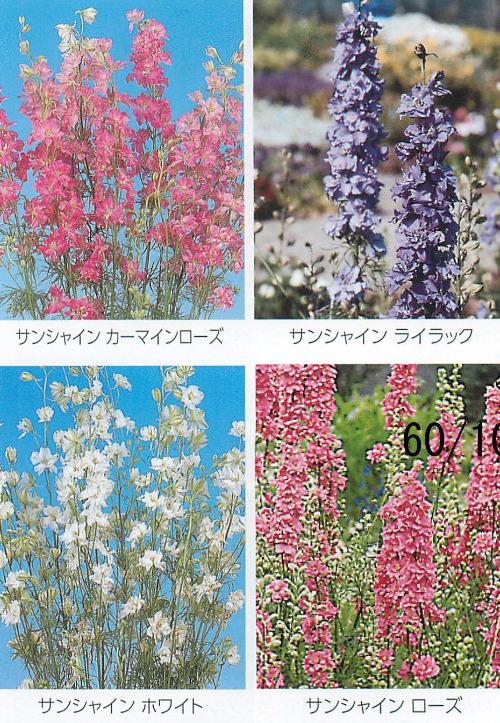 00015300_photo1.jpg