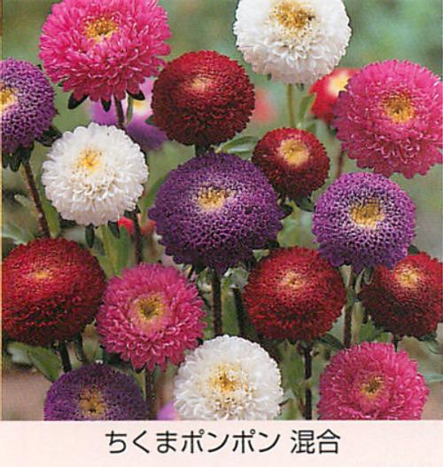 00015331_photo1.jpg