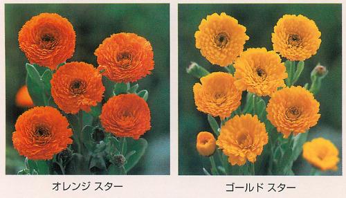 00015369_photo1.jpg