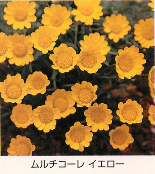 00015378_photo1.jpg