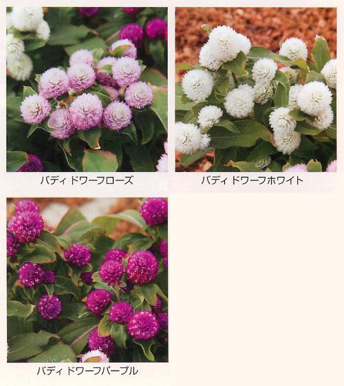 00015447_photo1.jpg