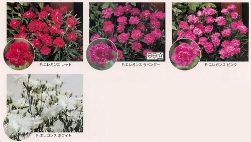 00015484_photo1.jpg