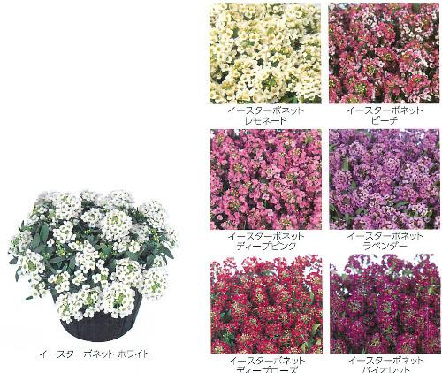 00015540_photo1.jpg