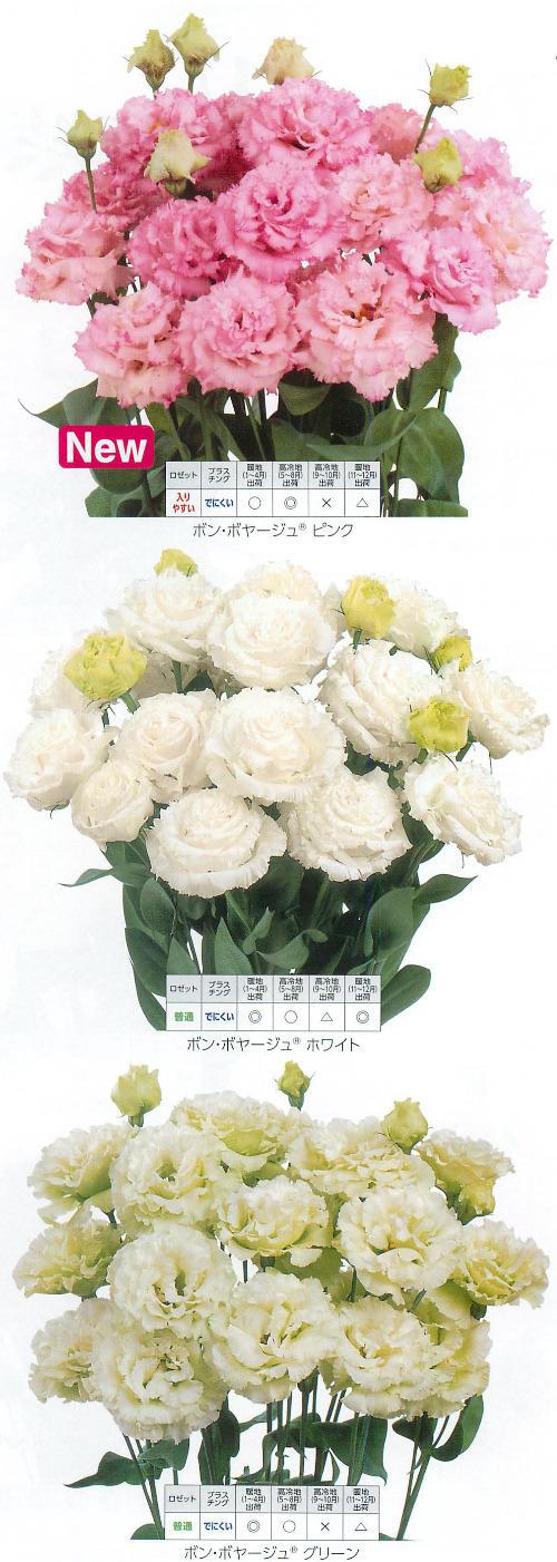 00015756_photo1.jpg