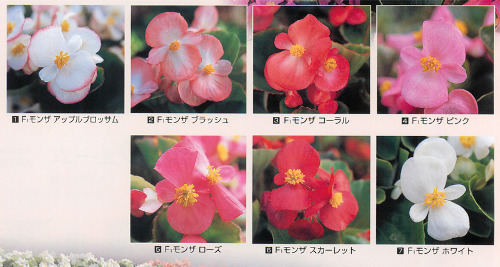 00015817_photo1.jpg
