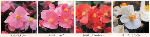 00015819_photo1.jpg