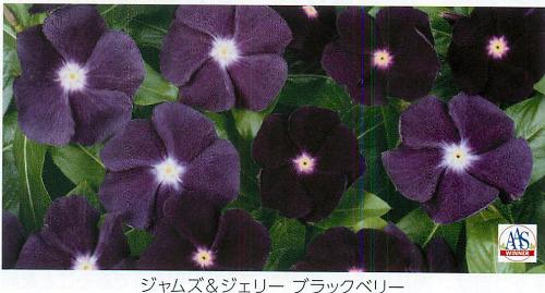 00015829_photo1.jpg