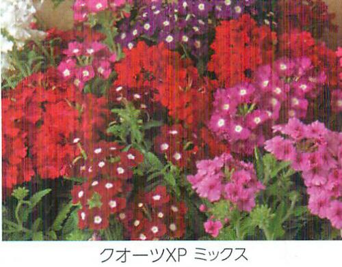 00015851_photo1.jpg