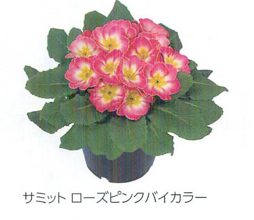 00015889_photo1.jpg