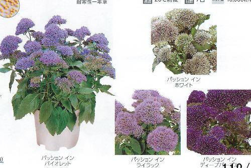 00015931_photo1.jpg