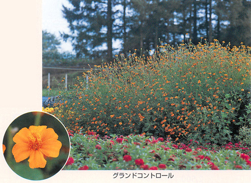 00015969_photo1.jpg