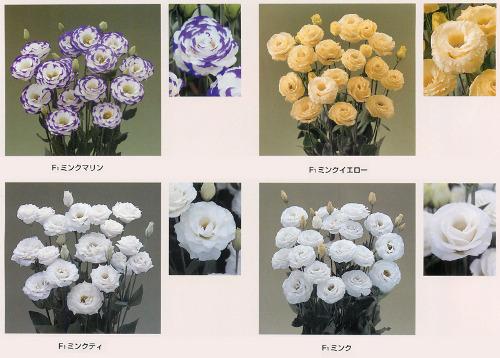 00015979_photo1.jpg