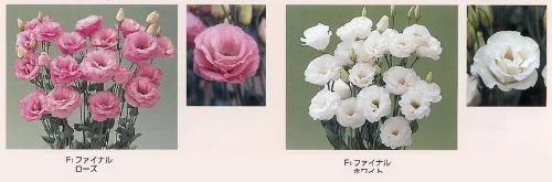 00015986_photo1.jpg