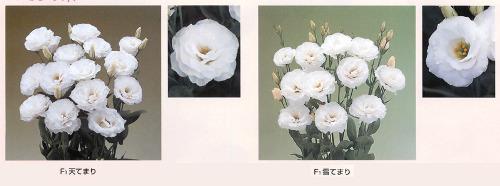 00015988_photo1.jpg