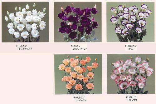 00015996_photo1.jpg