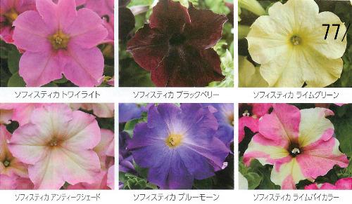00016120_photo1.jpg
