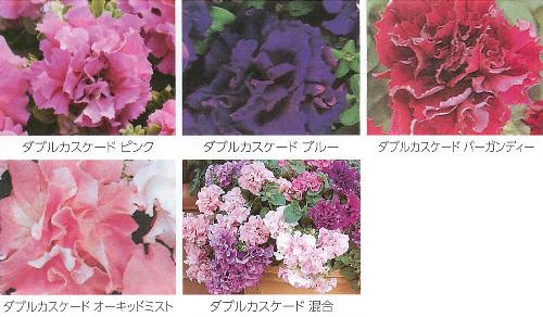 00016121_photo1.jpg