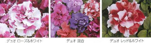 00016123_photo1.jpg
