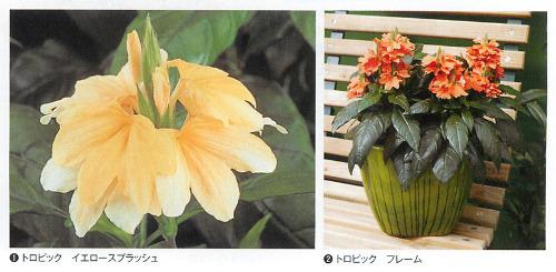 00016187_photo1.jpg