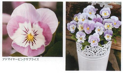 00016284_photo1.jpg