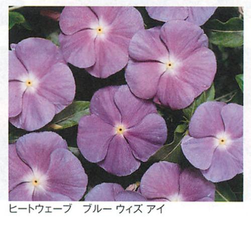 00016295_photo1.jpg