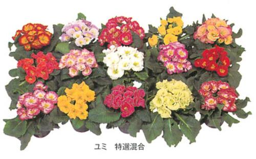00016304_photo1.jpg