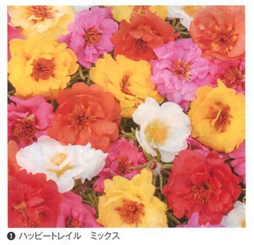 00016343_photo1.jpg