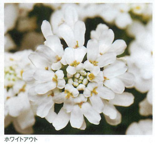 00016370_photo1.jpg