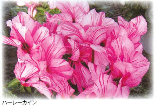 00016396_photo1.jpg