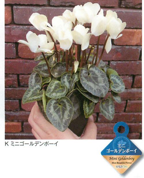 00016406_photo1.jpg