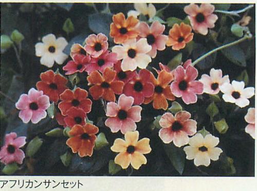 00016446_photo1.jpg