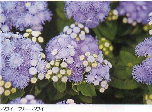 00016465_photo1.jpg