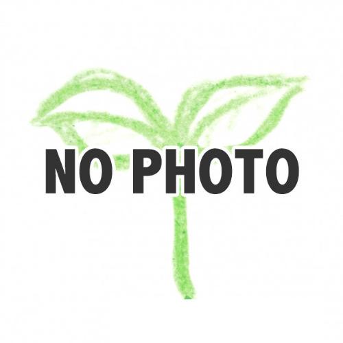 no_photo.jpg