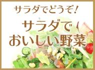 サラダで美味しい野菜