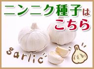 ニンニク種子