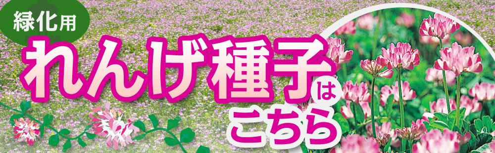 緑肥用れんげ