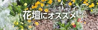 花壇にオススメ